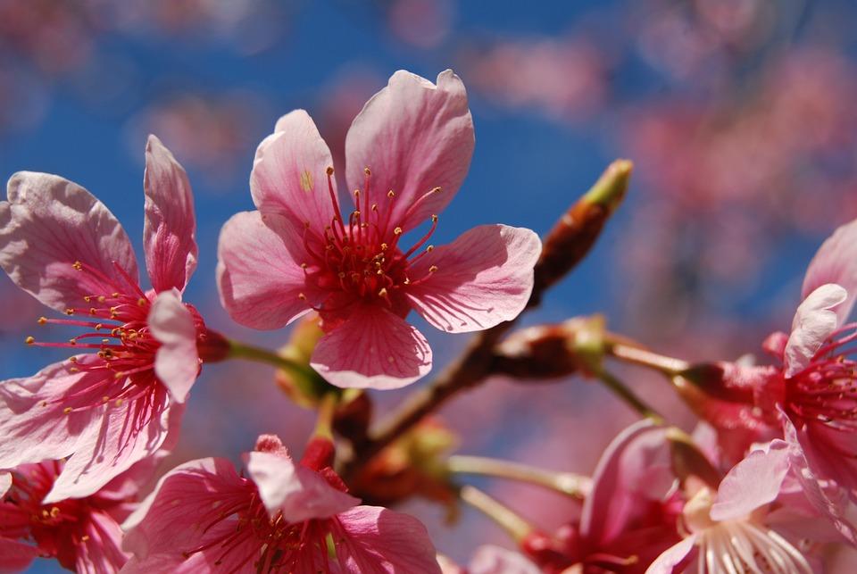 Foto gratis: Ronda De La Flor, Flores De Colores - Imagen gratis ...