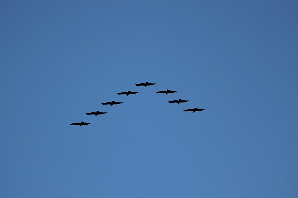 show veľké vtákyveľké prsia na veľké prsia