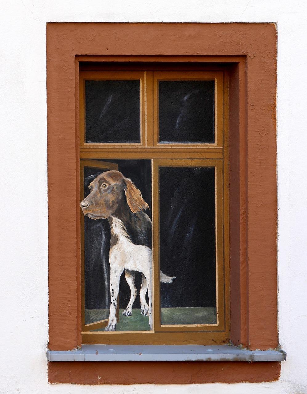 Смешные картинки собаки и окна, комплименты
