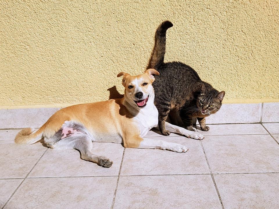 宠物猫狗- Pixabay上的免费照片