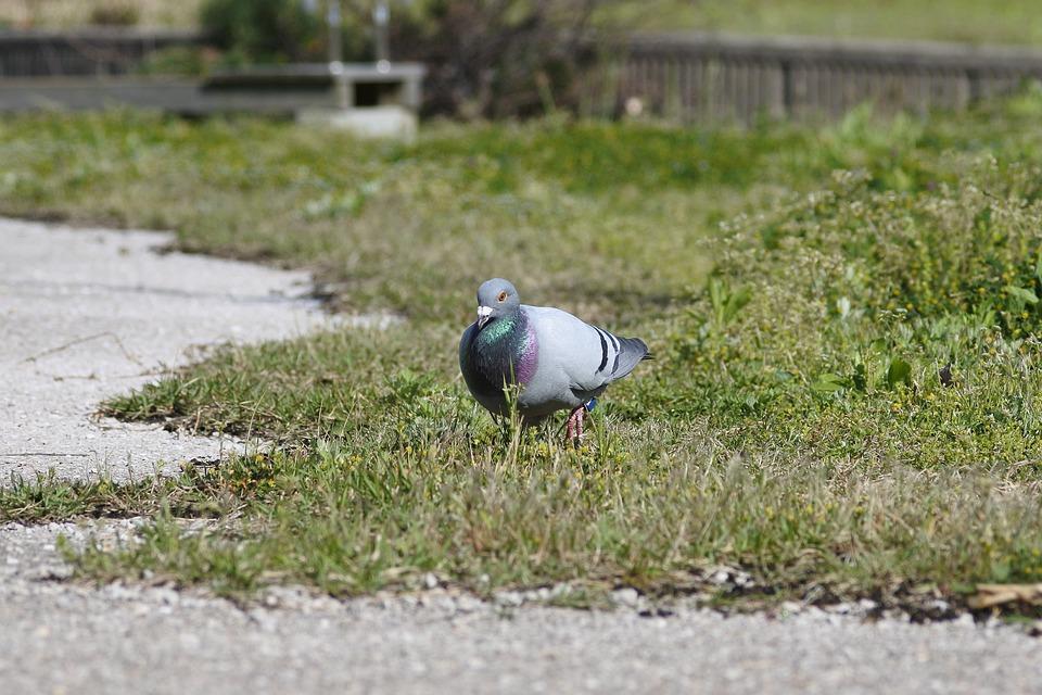 Veľké prsia & veľké vtáky