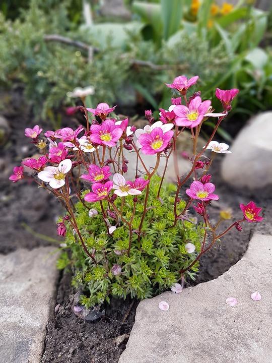Blumen Frühling - Kostenloses Foto auf Pixabay