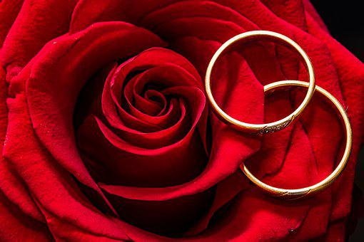 Wedding Rings, Rose, Rings, Gold Rings