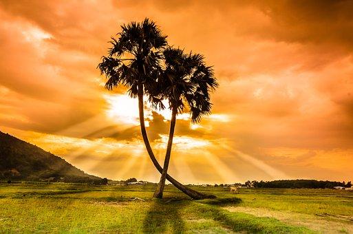 树, 走, 日落, 美女, 越南, 棕榈树, 场, 背光, 风景, 自发