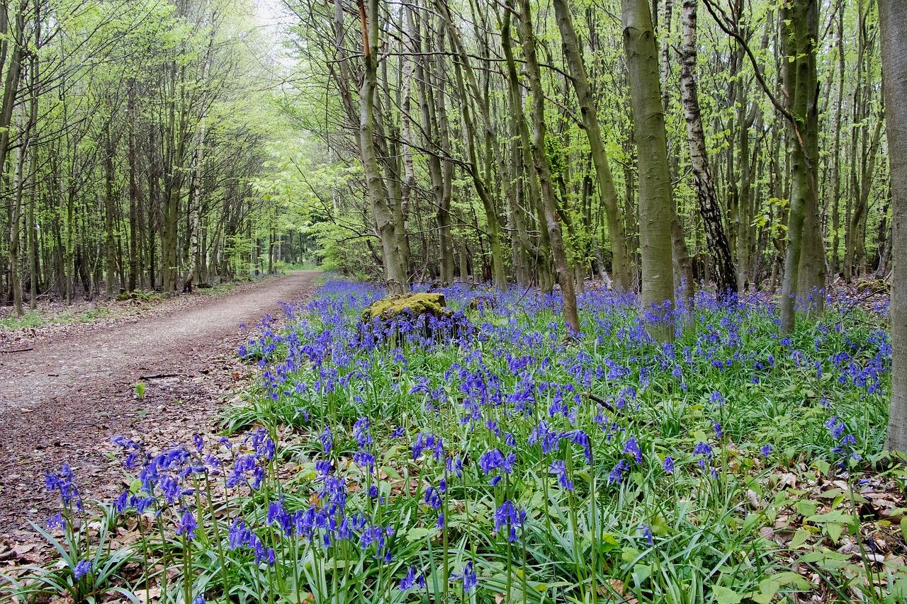 Фото весенних лесных цветов