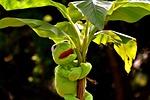 exasperate, frog