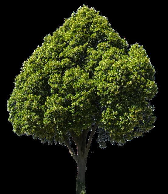 Дерево фото клипарт