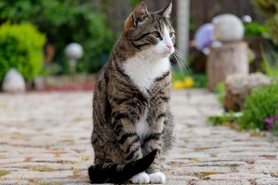 Katze, Sitzen, Haustier, Tier, Blick, Pose, Natur