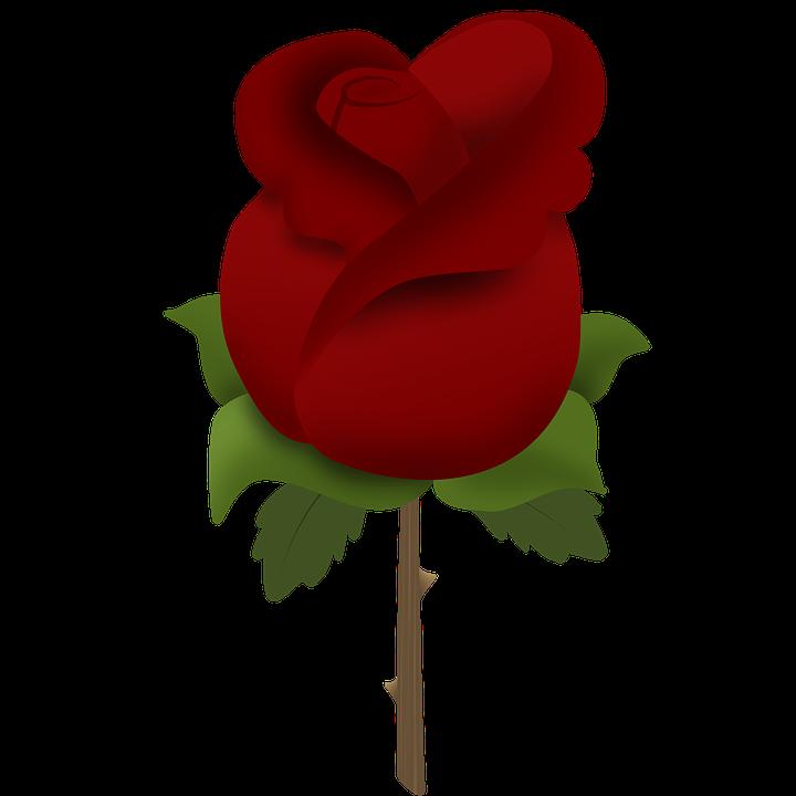 rosa flowers red rose free image on pixabay