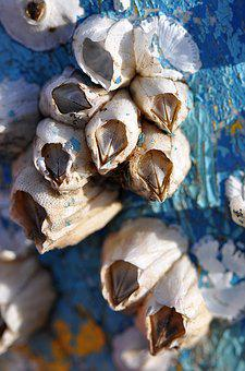 Barnacles, Macro, Blue, Aqua, Close-Up