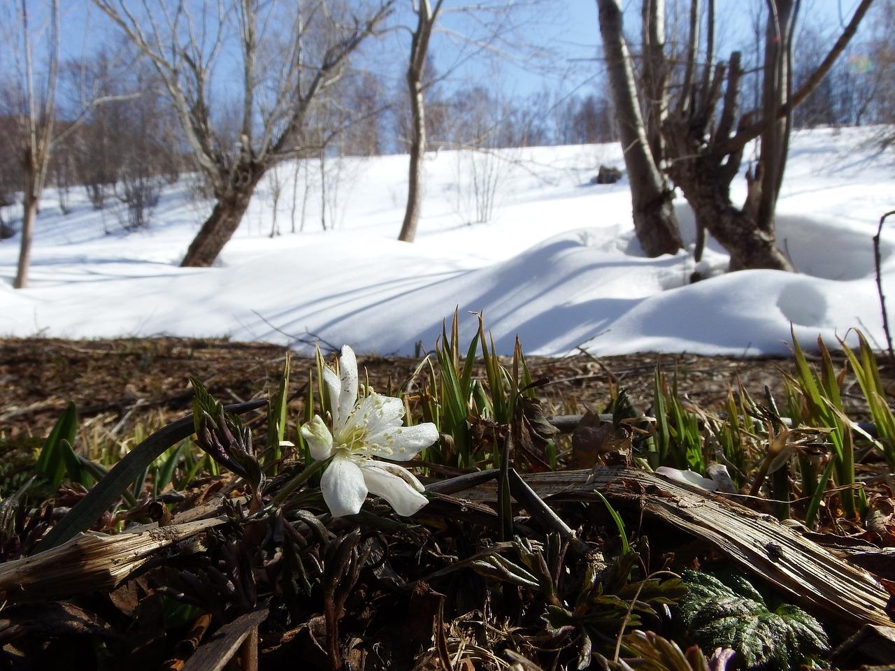 кликание весны фото вот