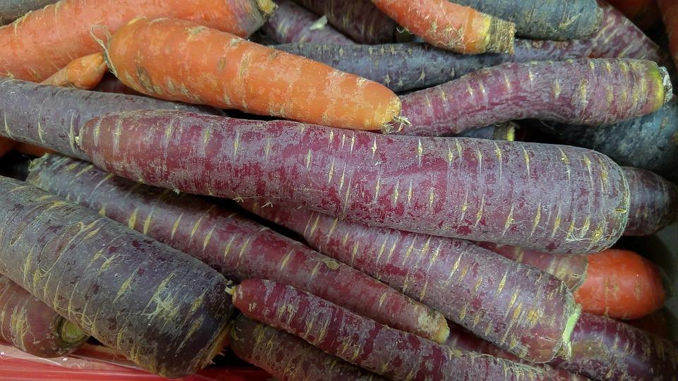 Möhren, Gemüse, Gemüsegarten, Lila Karotte