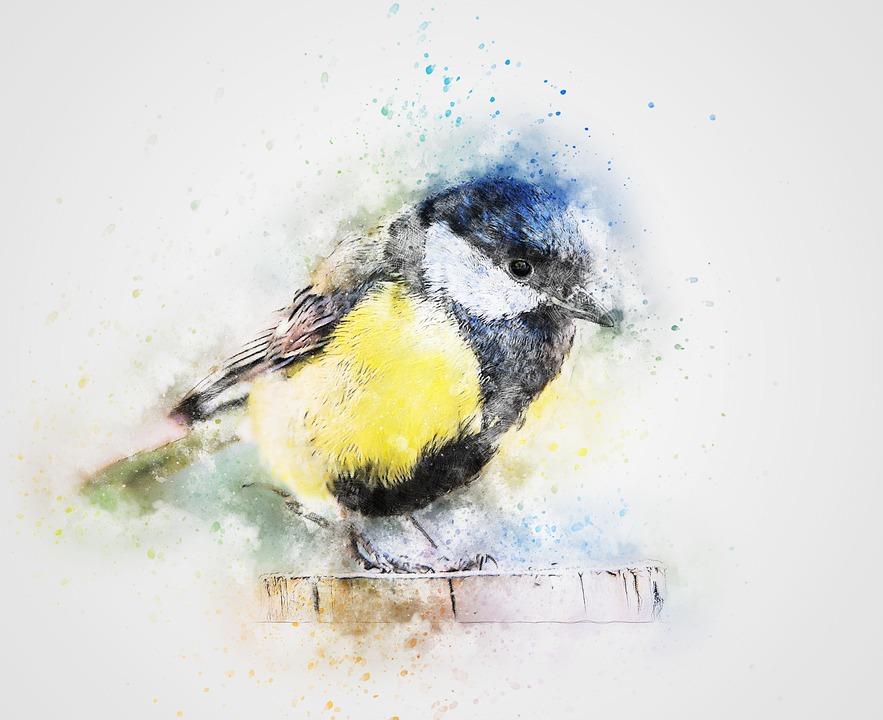 Vogel Farbe Federn Meise · Kostenloses Bild auf Pixabay