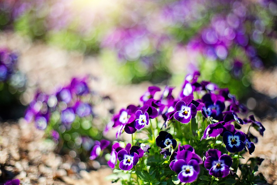 free photo purple flowers, flowers, spring  free image on, Beautiful flower