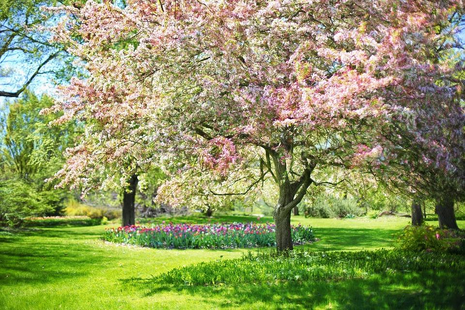Fleurs printemps rose - Arbre rose japon ...