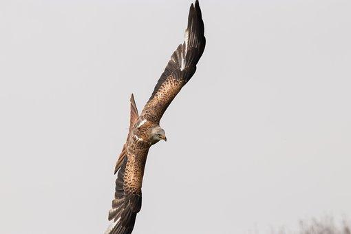 μεγάλο λευκό πουλί GIF γυμνό εικόνες πορνό