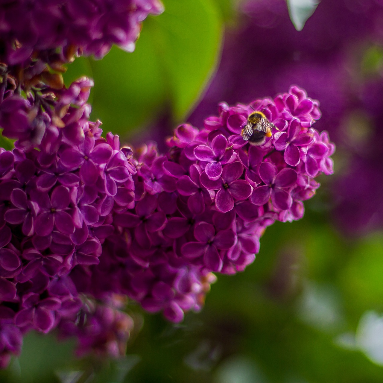 Первоцветы якутии фото безукоризнен, любовью