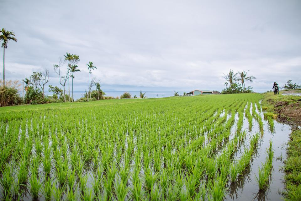 Use Of Remote Sensing To Estimate Paddy Area And Production