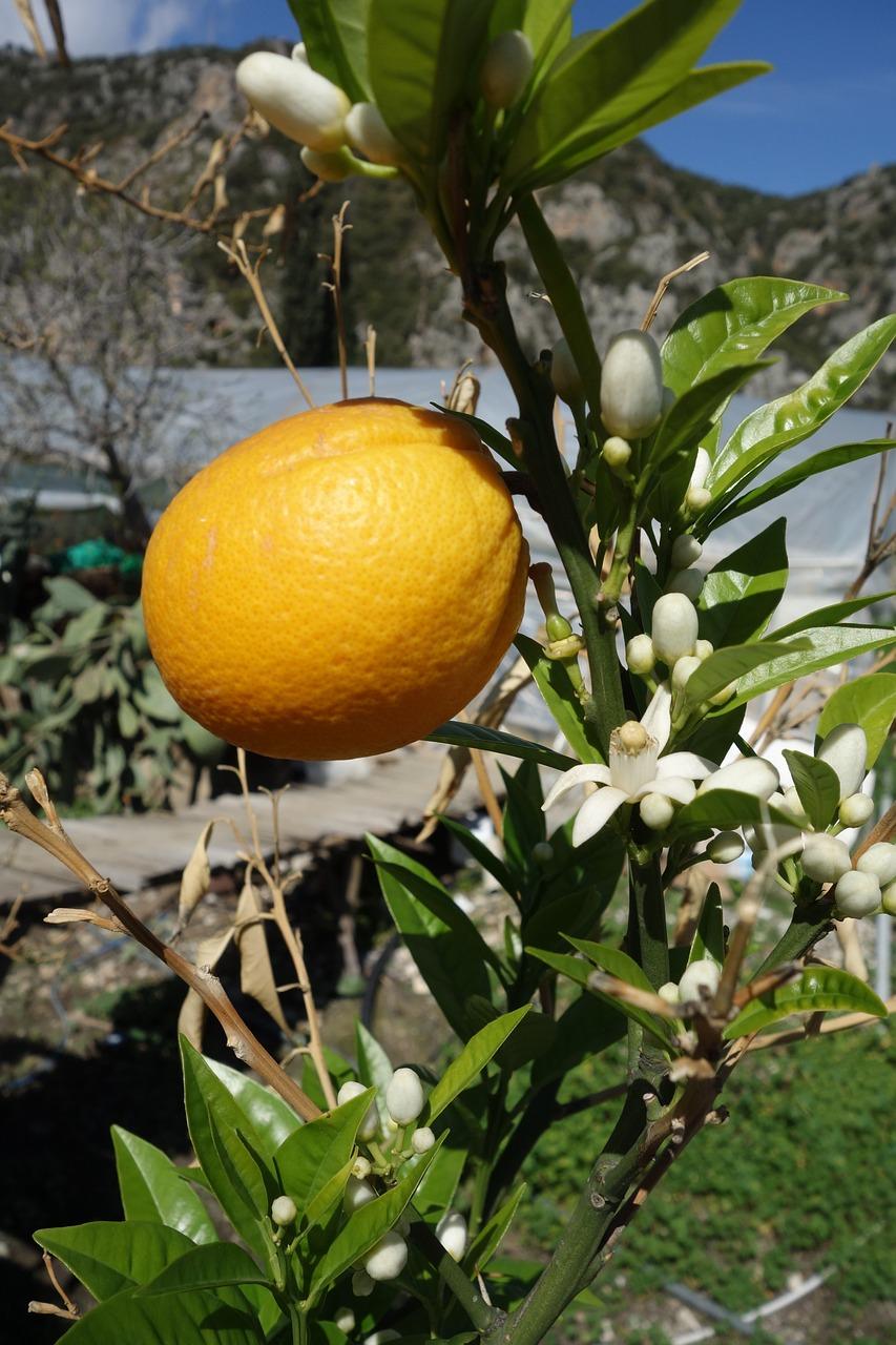Картинки апельсины и цветы, открытки