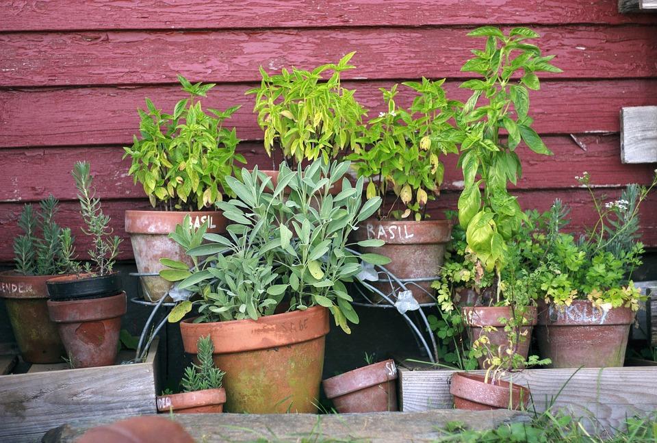 Herb Garden Pots Garden Gardening Plant Green