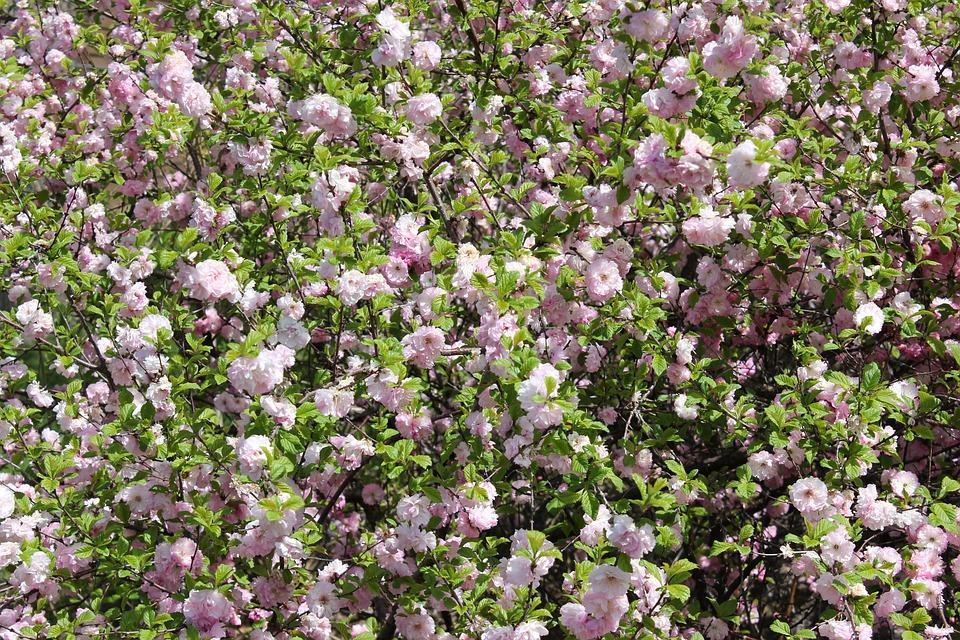 flowers bush garden nature plant blossom floral - Bush Garden