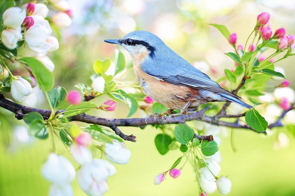 鳥、枝、腰掛け、羽、青い鳥、羽毛