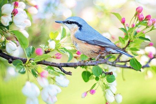 鳥, 支店, 座っている, 羽毛, 青い鳥, 羽, 小さな鳥, アベニュー