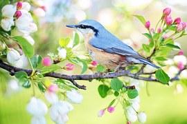 Spring Bird, Bird, Spring, Blue
