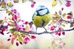 wiosna ptak, ptak, sikora