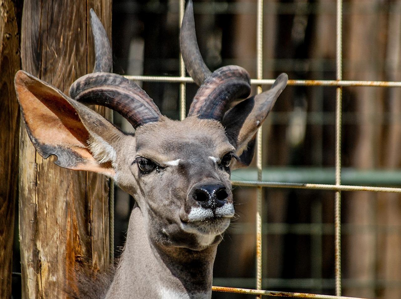 услуги рога животных фото готовим такое простое