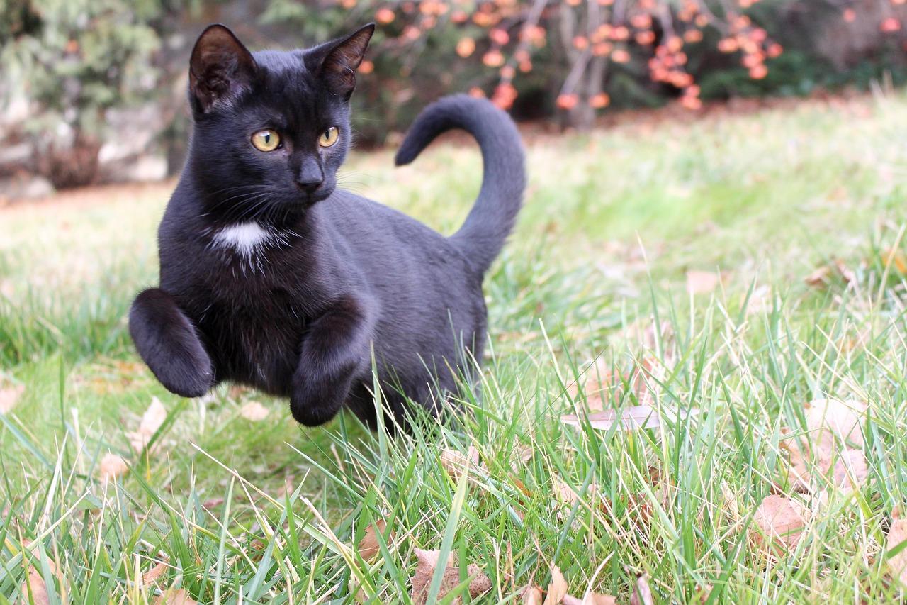 черные кошки животные фото таком виде посреди