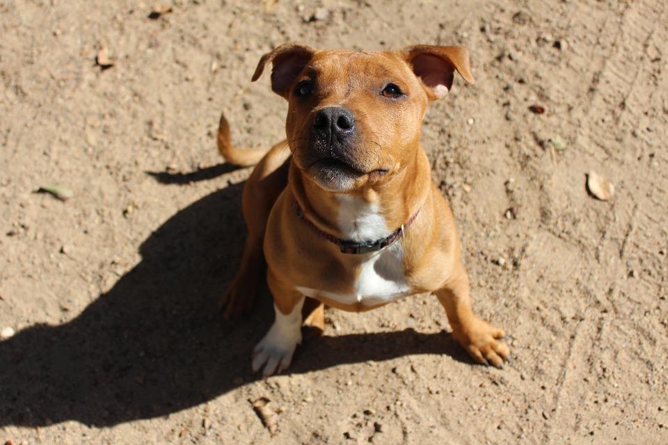 Amazing Puppy Brown Adorable Dog - puppy-2298836_960_720  Gallery_517745  .jpg