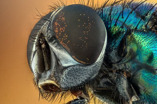 Macro, Fly, Compound Eyes, Insect, Green