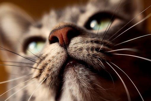 Katze, Tier, Haustier, Nahaufnahme
