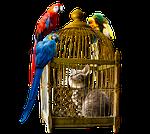 animals, bird, cat
