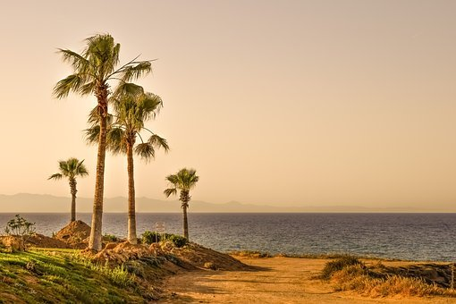 Palm Trees, Sea, Horizon, Landscape