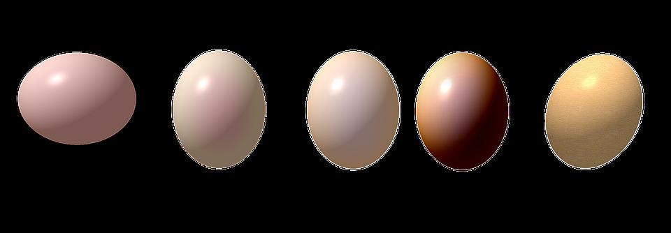 ovo ovos desenho imagens grátis no pixabay