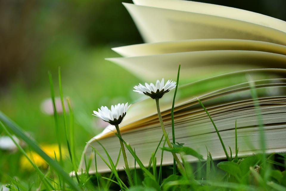 หนังสือ, อ่าน, พักผ่อน, ทุ่งหญ้า, Buchseiten, การศึกษา