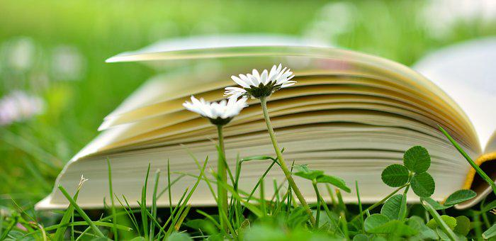 Book, Read, Relax, Meadow, Book Pages