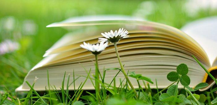 本书, 读取, 放松, 草地, 书页, 教育, 图书, 学习, 文学, 雏菊