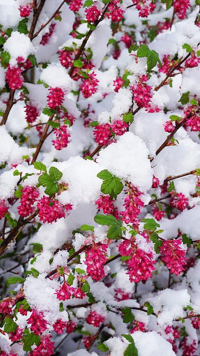 Winter Spring Flowers Free Photo On Pixabay