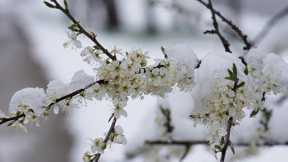 Free Photo Winter Blast Flowers Winter Free Image On