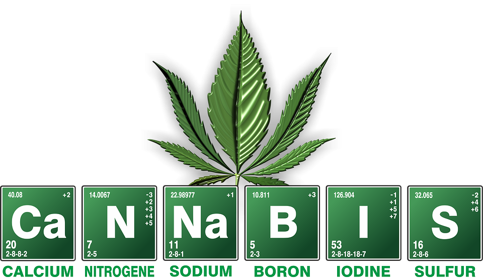 Image result for Cannabis for Health