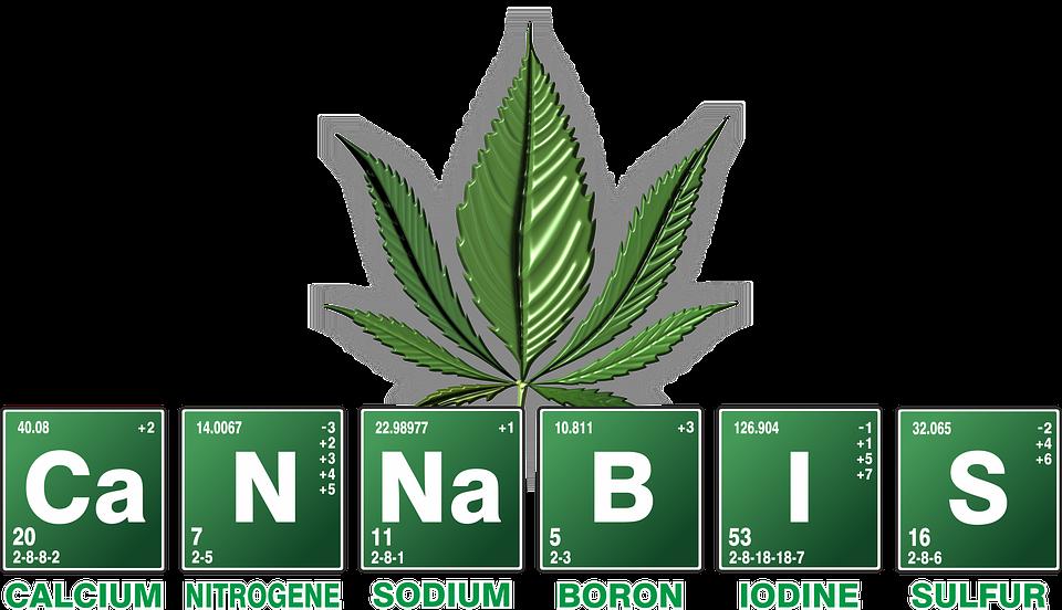 תוצאת תמונה עבור cannabis different strain