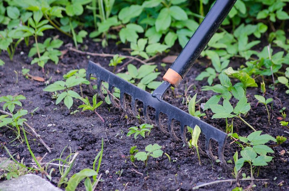 Gardening, Rake, Garden, Tool, Equipment