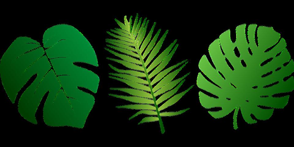 leaves tropical palms free vector graphic on pixabay rh pixabay com Tropical Plants Clip Art Tropical Leaf Clip Art