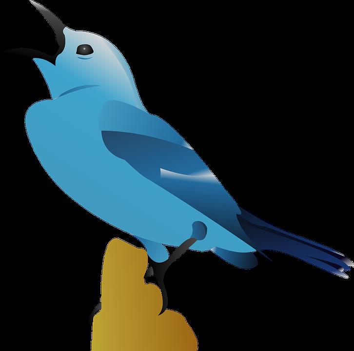 Unduh 99+ Gambar Burung Vektor Keren Gratis