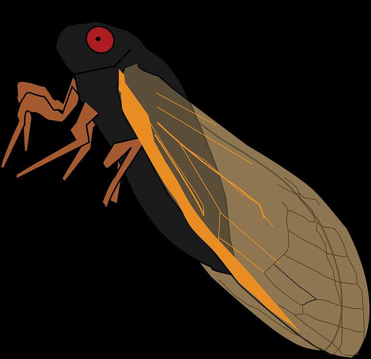 Magicicada, Cicada, Vector, Periodical Cicada, 17 Year