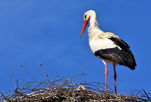 The Navigational Precision Of Birds
