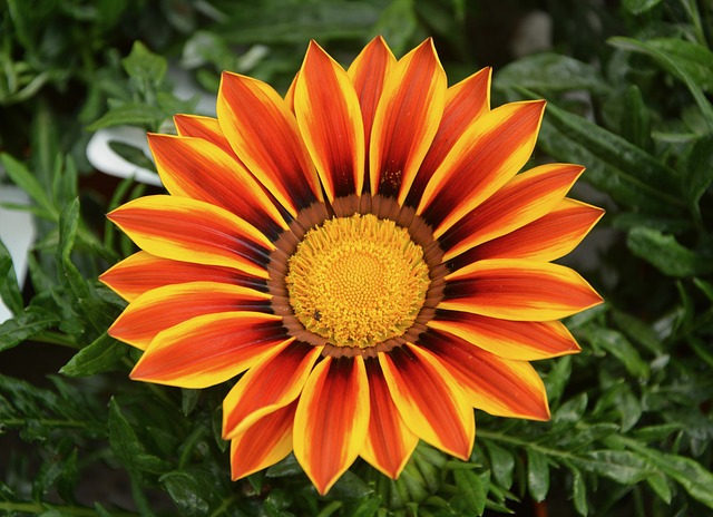 Flower Marguerite Orange · Free photo on Pixabay Pictures Of Flowers